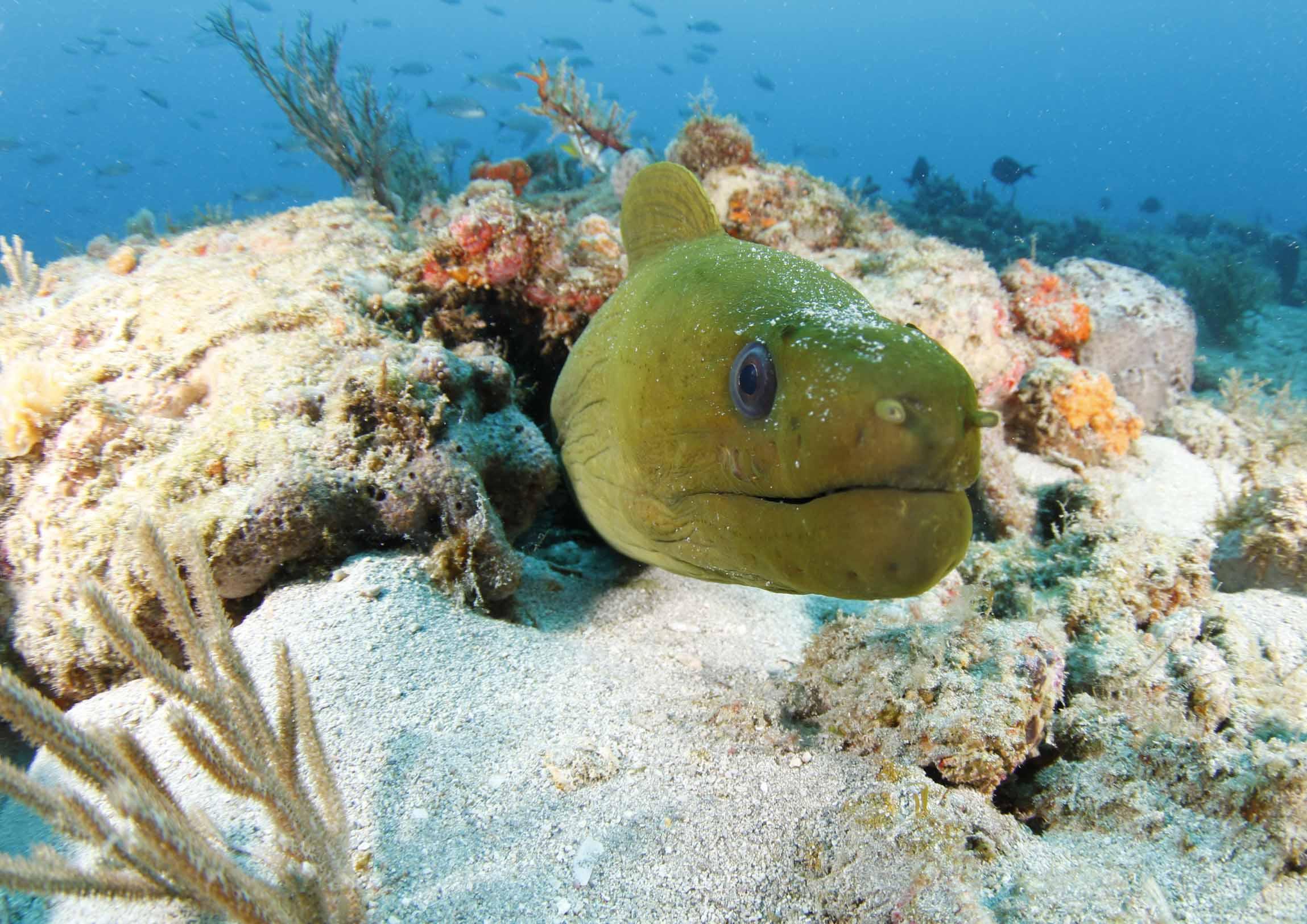 SCUBA Diving In West Palm Beach Florida